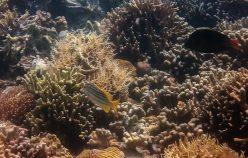 [:fr]Les fonds sous-marin de Coron[:en]Coron's underwater world[:]