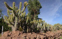 cactus [:cactuses]