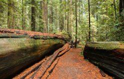 fallen long tree