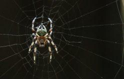 Araignées au parc redwood