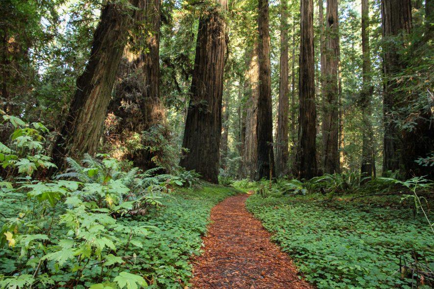 Chemin dans le Humboldt State Park