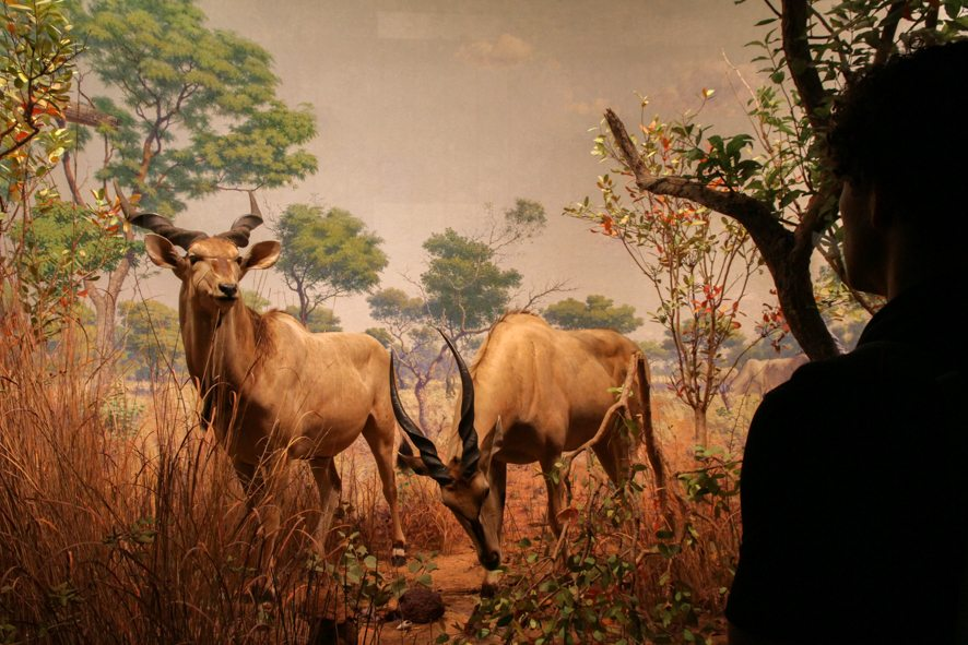 museum-natural-history-new-york