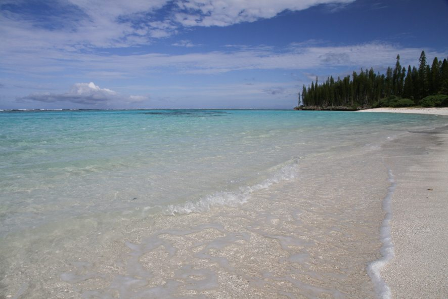 mare in New Caledonia