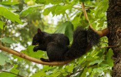 [:fr]Ecureuil noir à Central Park[:en]Black Squirrel in Central Park[:]