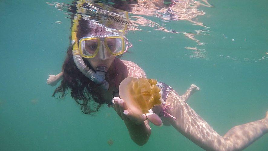 Jellyfish of Kakaban Lake, Indonesia