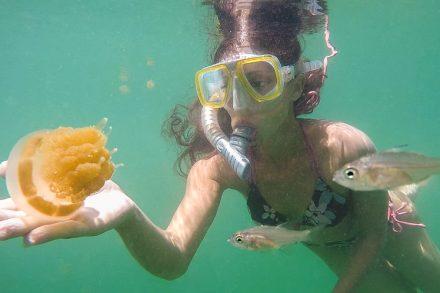 Jellyfish Kakaban