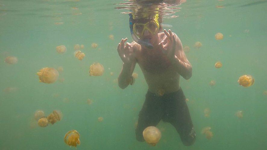 Méduses du lac Kakaban