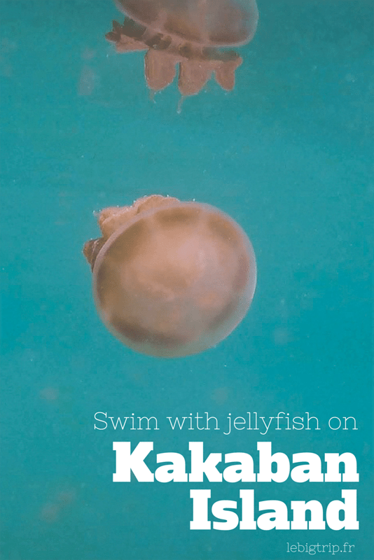 Swim with jellyfish on Kakaban Island - more info on http://lebigtrip.fr/en/kakaban-jellyfish-lake