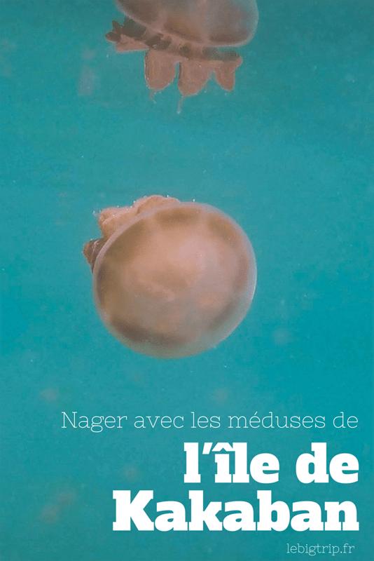 Nager avec les méduses de l'ile de Kakaban, en Indonésie - plus d'informations sur http://lebigtrip.fr/kakaban-lac-meduses/