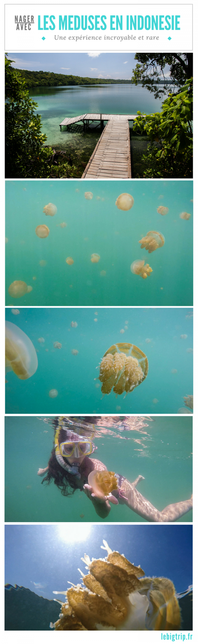 [VIDEO] Nager avec les méduses de Kakaban, une experience incroyable