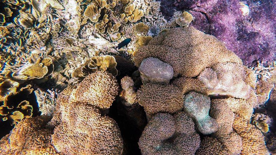 Coral around Sangalaki island