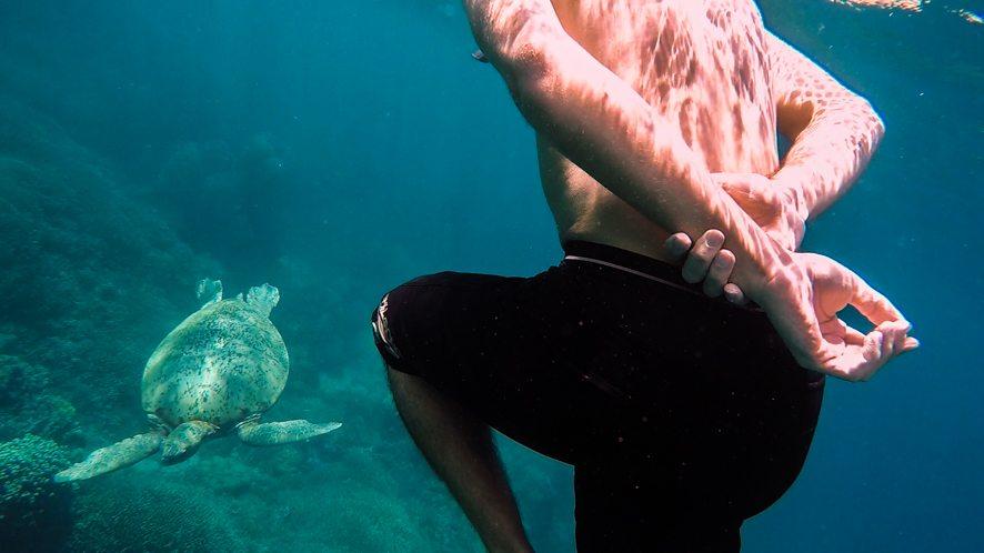 Turtles around Sangalaki island