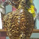 [:fr]Jeune tortues utilisées comme décoration murale[:en]Juvenile turtle stuffed[:]