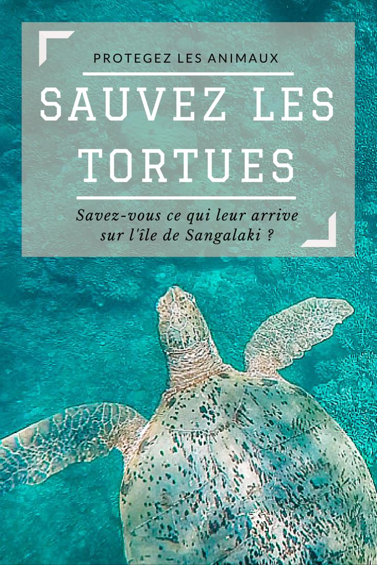 Sauvez les tortues, n'allez pas sur l'ile de Sangalaki