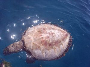 [:fr]Tortues dépecées vivantes[:en]Turtles are peeled alive[:]