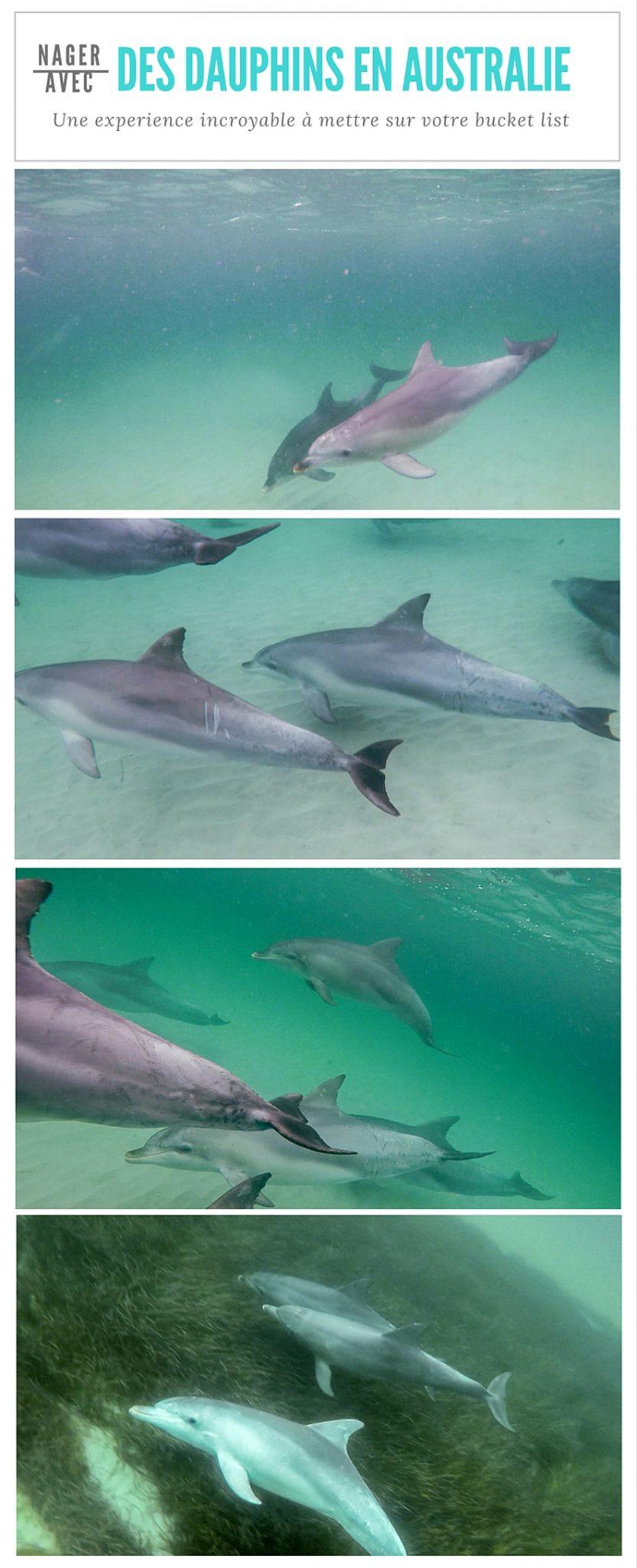 Nager avec des dauphins sauvages, à Kangaroo Island, en Australie est une expérience inoubliable... à mettre sur votre bucket list