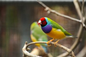 [:fr]Les oiseaux colores d'Australie[:en]Colorful birds of Australia[:]