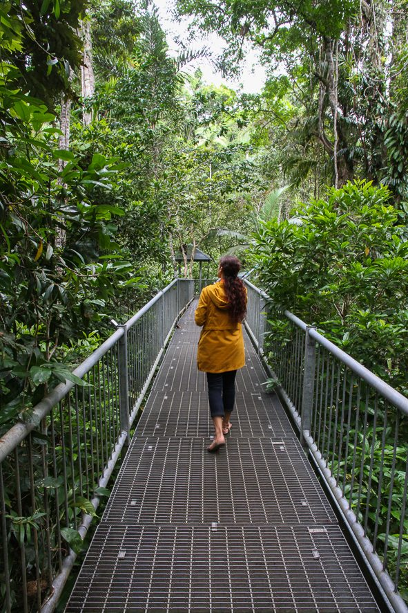 Spending some time at the Daintree Discovery Center