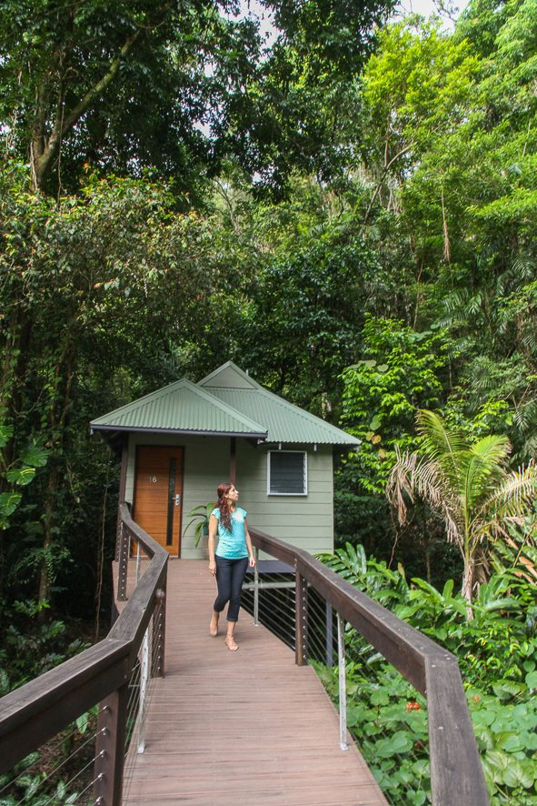 Our beautiful Rainforest Banyan, Daintree Ecolodge