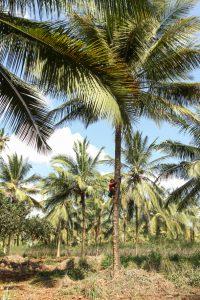 [:fr]Noix de coco Zanzibar[:en]Coconut Zanzibar[:]