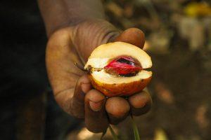 [:fr]noix de muscade de Zanzibar[:en]Zanzibar Spice Tour - nutmeg[:]