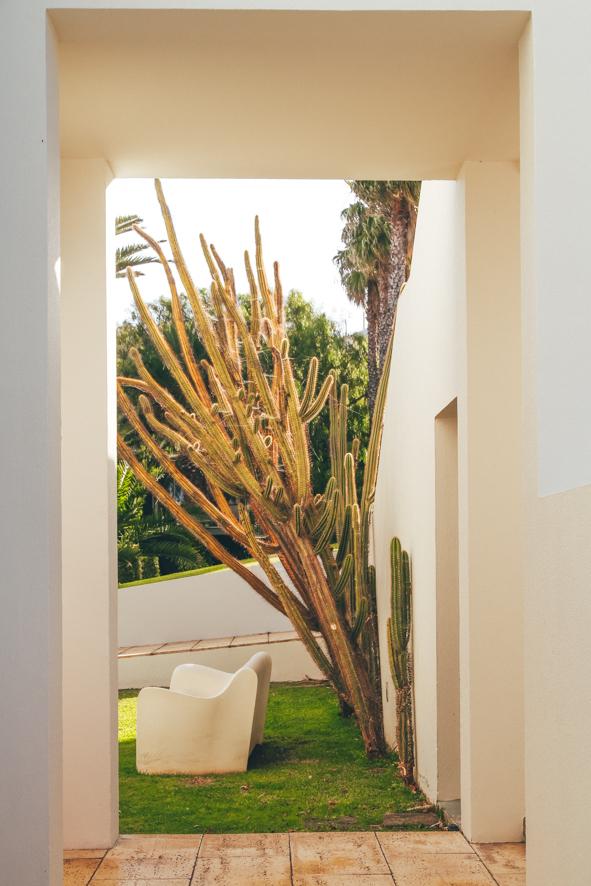 Cactus in Estalagem da Ponta do Sol