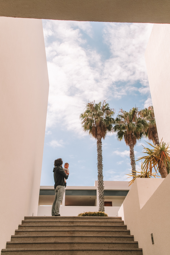 Palmtrees in Estalagem da Ponta do Sol